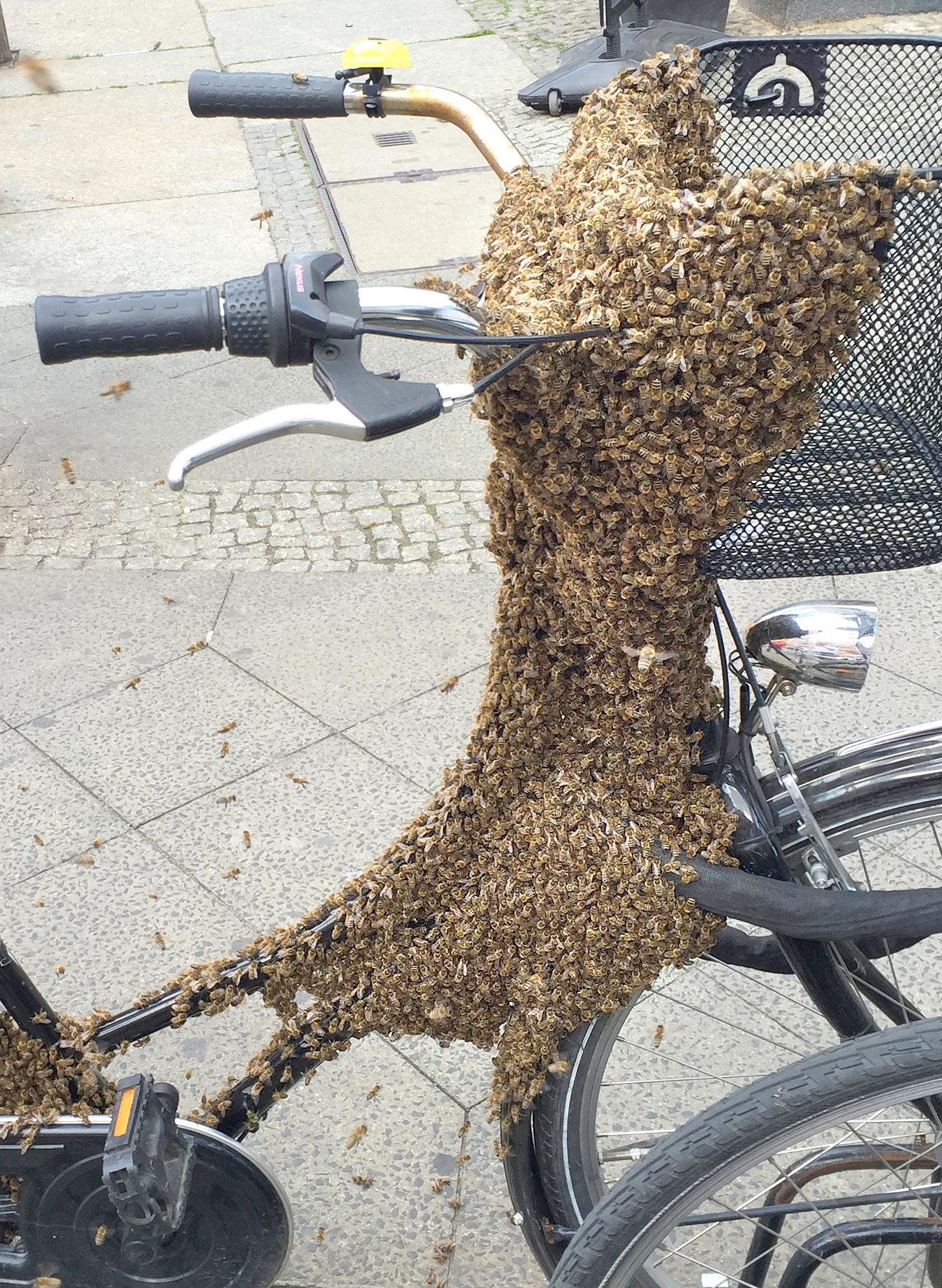Bienenvolk auf Damen-Fahrrad