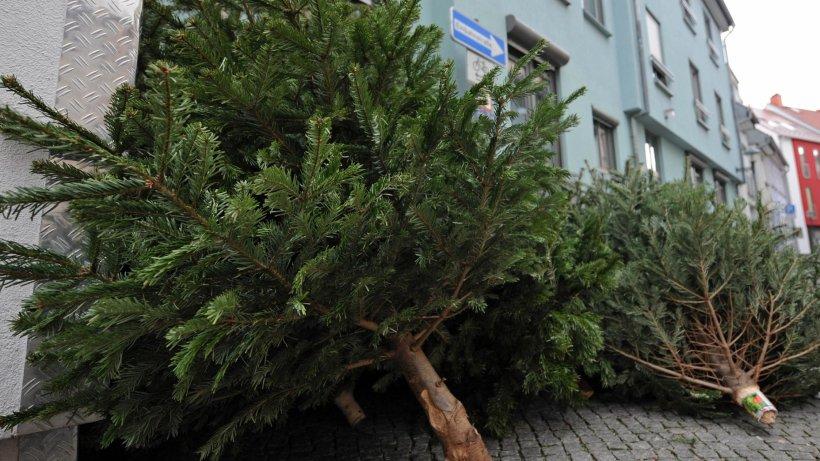 wann die bsr ihren weihnachtsbaum abholt berlin. Black Bedroom Furniture Sets. Home Design Ideas